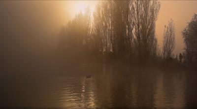 雾松天鹅湖